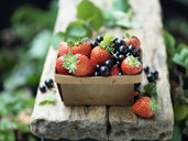 Strawberries and blackcurrants in vintage wooden basket - CUF30292