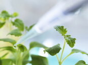 Close up of pipetting experimental chemical onto seedling in laboratory - CUF31083