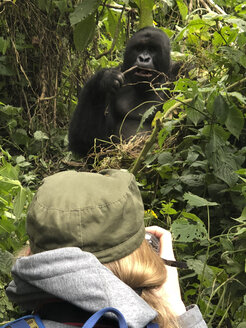Congo, Woman taking picture of mountain gorilla - REAF00279