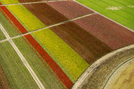 Aerial view of tulip fields and paths - ISF09693
