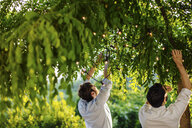 Two men putting string of fairy light in tree, outdoors, rear view - CUF31502