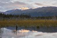 USA, Alaska, Denali Road in autumn - CVF00818