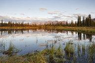 USA, Alaska, Denali Road in autumn - CVF00830