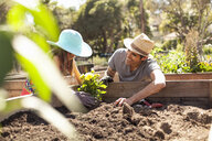 Girl and father planting flower bed in community garden - ISF10300