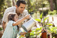 Girl with father using watering can in community garden - ISF10309