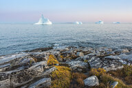 Icebergs in tranquil ocean, Disko Island, Greenland - CAIF20740