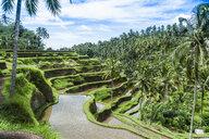 Rice fields, Bali, Indonesia - CUF32703