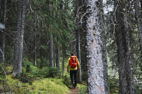 Rear view of mid adult man carrying orange backpack trekking through forest, Moraine lake, Banff National Park, Alberta Canada - ISF11691
