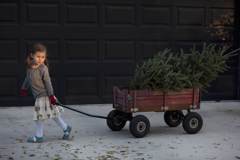 Portrait of a girl pulling cart with christmas tree - ISF12902