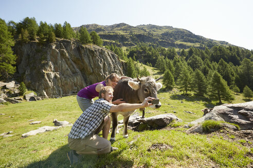 Young couple taking smartphone selfie with cow, Val Senales, South Tyrol, Italy - ISF13684