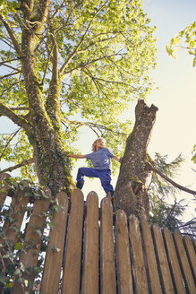 Young boy climbing tree, low angle view - ISF13726