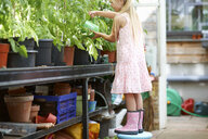 Girl standing on stool to water the plants in greenhouse - ISF13786
