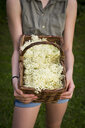 Girl holding basket of picked elderflowers, partial view - LVF07119