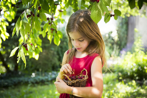 Portrait of little girl with basket of cherries - LVF07139