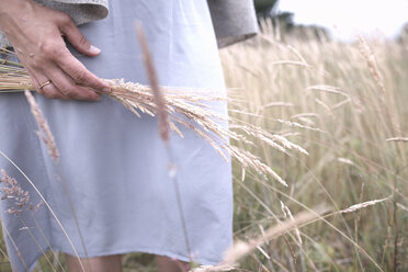 Woman's hand holding grasses on a filed, partial view - KMKF00394