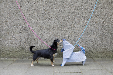 Blue origami dog and dog sniffing - PSTF00155