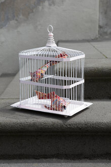 Origami cois in cage - PSTF00161