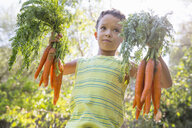 Portrait of boy in garden holding up bunches of carrots - CUF35261
