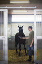 Male stablehands feeding black horse in stables - CUF35759