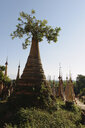 Tree and Shwe Indein pagodas, Nyaung Shwe, Inle Lake, Burma - CUF35812