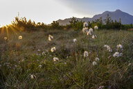 Germany, Bavaria, Upper Bavaria, Chiemgau, near Grassau, Kendlmuehlfilzen, hill moor, nature reserve, renaturated area, Cotton Grass in the morning light - LBF01972
