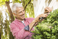 Mature man pruning bush with secateurs - CUF37755