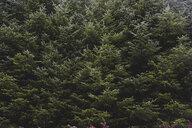 United Kingdom, England, Cumbria, Lake District, fir trees, close up - WPEF00546