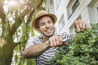 Young man pruning bush in garden - CUF38051