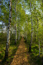 Germany, Bavaria, Upper Bavaria, Chiemgau, Grassau, alley with birch trees - LBF01981