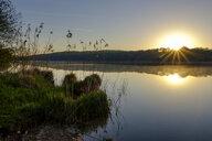 Germany, Bavaria, Upper Bavaria, Chiemgau, Rupertiwinkel, reed at Tachinger See against morning sun - LBF01984