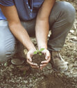 Cropped shot of young male farmer holding soil and seedling, Premosello, Verbania, Piemonte, Italy - CUF38649