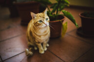 Portrait of tabby cat sitting on tiled floor - RAEF02055