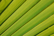 Close-up of palm leave - JTF01024