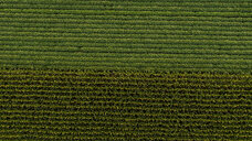 Serbia, Vojvodina, Aerial view of soybean and corn crops - NOF00053
