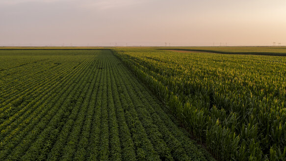 Serbia, Vojvodina, Aerial view of soybean and corn fields in late summer afternoon - NOF00056