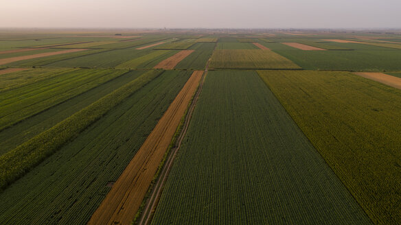 Serbia, Vojvodina, Aerial view of corn, wheat and soybean fields in the late summer afternoon - NOF00059