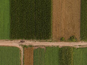 Serbia, Vojvodina, Aerial view of corn, wheat and soybean fields in the late summer afternoon - NOF00062