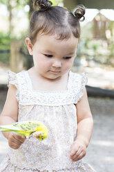 Baby girl holding budgerigar parakeet at zoo - ISF16527