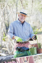 Older man gardening outdoors - CUF39189