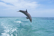 Honduras, Roatan, bottlenose dolphin jumping into the sea - RUEF01889