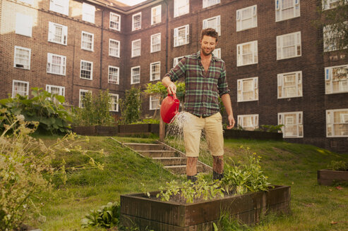 Mid adult man watering raised beds on council estate allotment - CUF39961