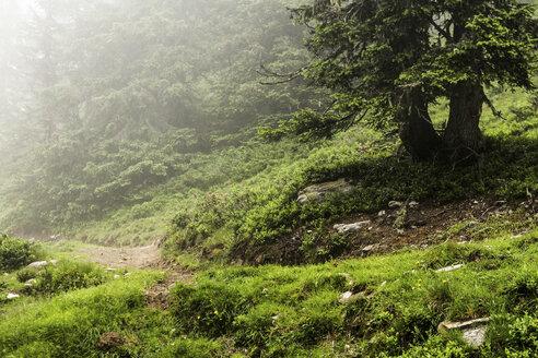Fog rolling over rural dirt path - CUF40217