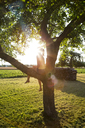 Silhouette of girl sitting on tree in summer at backlight - LVF07256