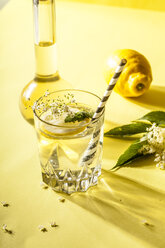 Glass of homemade organic elder lemonade with slice of lemon - SBDF03660