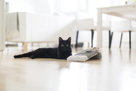 Black cat lying on the floor with toys in the living room - CHPF00491