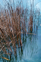 Lake, grass, Berlin, Germany - NGF00449