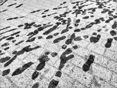 Foodprints in the snow, Berlin, Germany - NGF00458