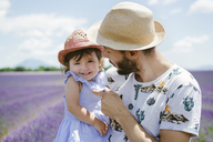 France, Provence, Valensole plateau, happy father and daughter in lavender fields in the summer - GEMF02128