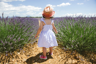 France, Provence, Valensole plateau, rear view of toddler girl standing in purple lavender fields in the summer - GEMF02137