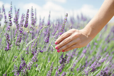 France, Provence, woman touching lavender bloosoms in field in the summer - GEMF02149